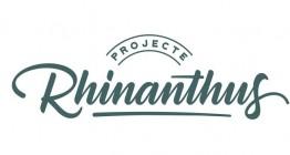Rhinanthus2_2.jpg