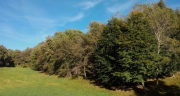 Pastures de Coma-Serra