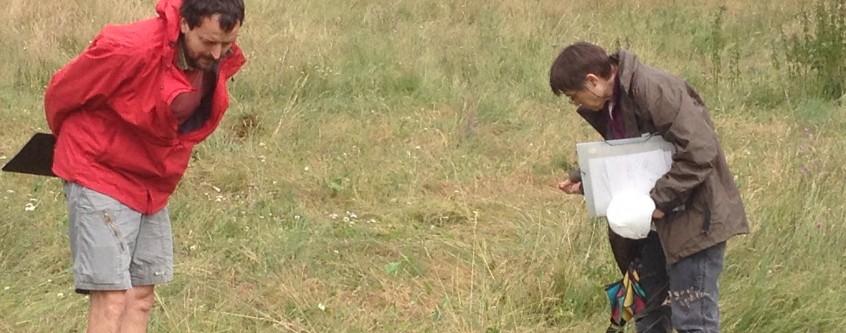 Inventariant pastures